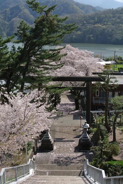 与瀬神社の桜